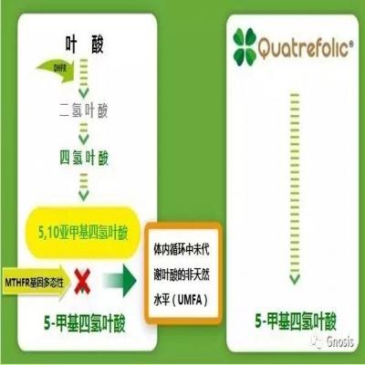 Quatrefolic® VS 叶酸